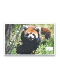 Red Panda Logo Post Card